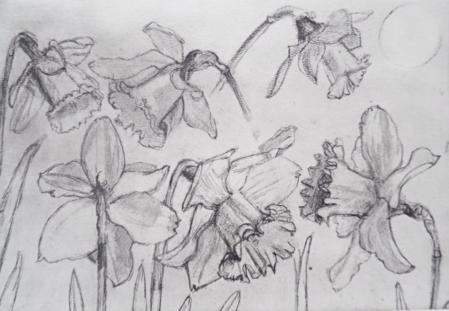Daffodils etching £xx