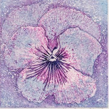 Pansy 1 multiplate etching unique £30