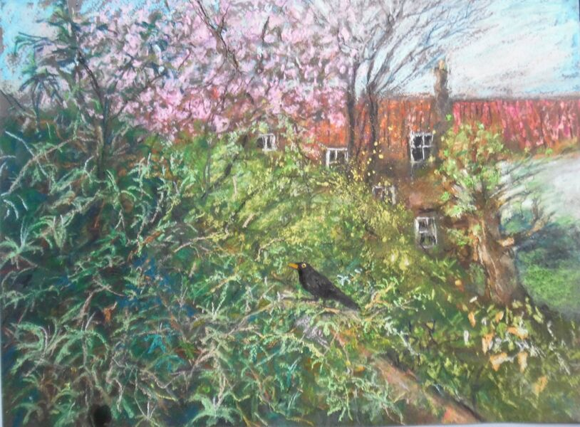 """""""Jo's blackbird on a branch"""" pastel painting done from my bedroom window"""