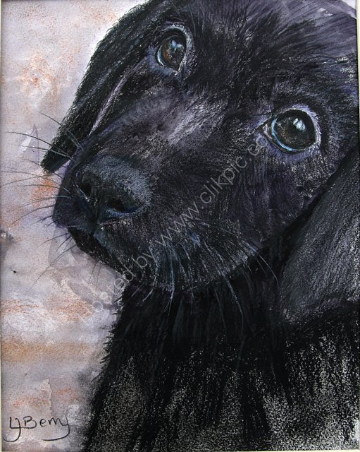 JAZZ as a puppy SOLD
