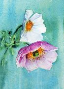 Anemone & Cosmos   SOLD