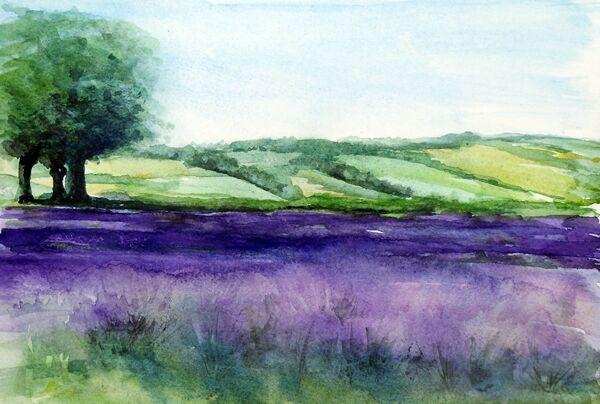 Selbourne Lavender