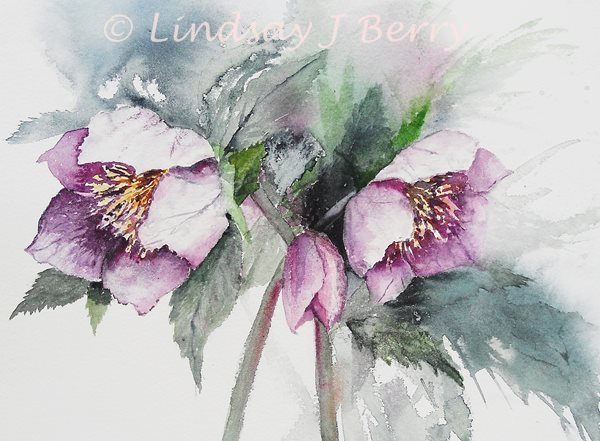 Lenten Rose   SOLD (Prints Available)
