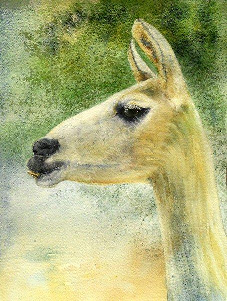 Llama Glamour