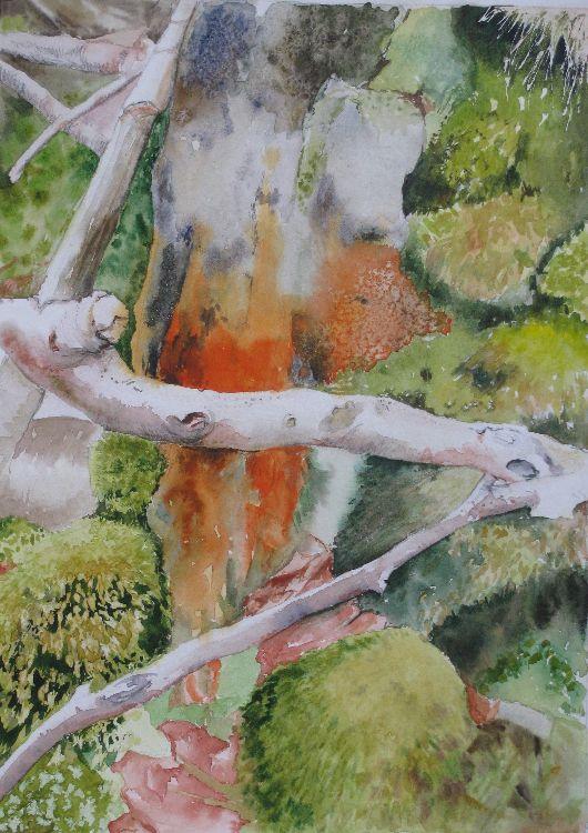Strensall Moss