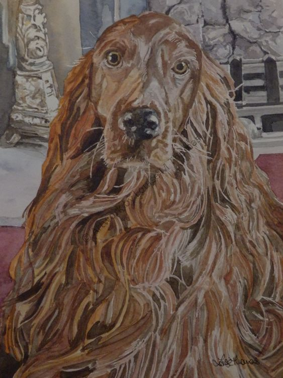 Archie (SOLD)
