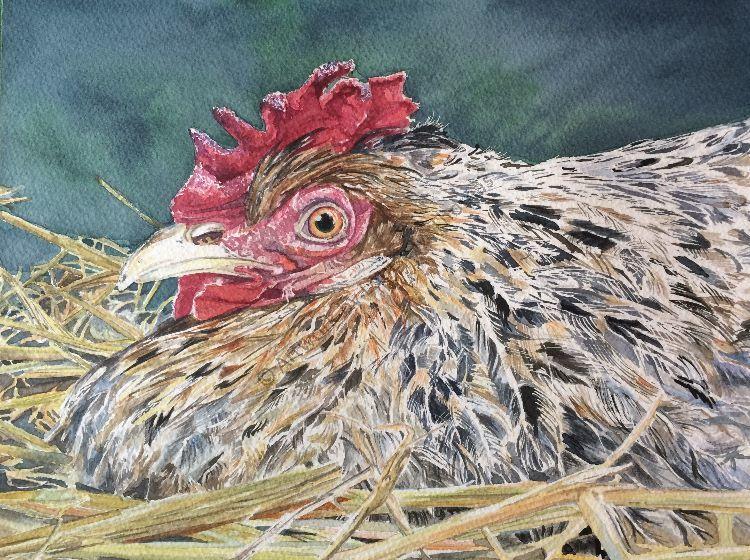 Big hen