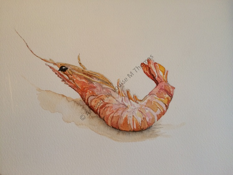 Bob the prawn SOLD