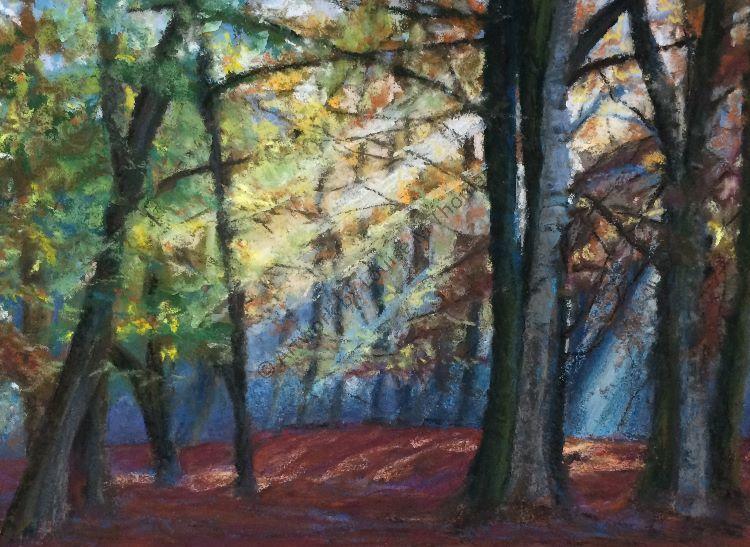 Moody woodland