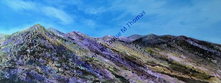 Mourne Mountains Summer Heather