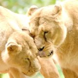 Wild affection
