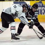 Basingstoke Bison Ice Hockey