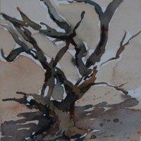 Dried mangrove tree