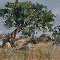 Serengeti rocks
