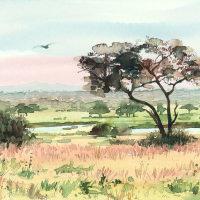 Tarangire tree