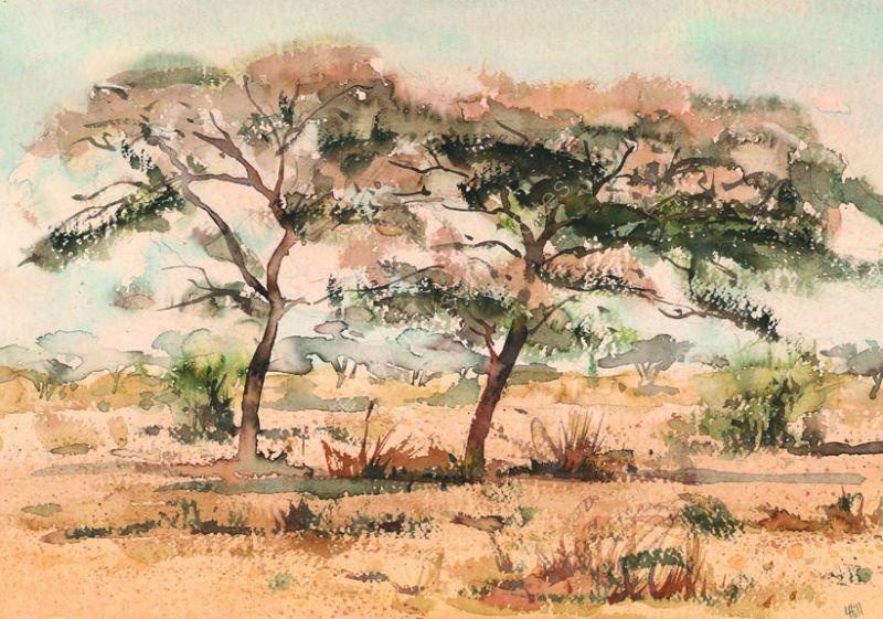 Two acacias
