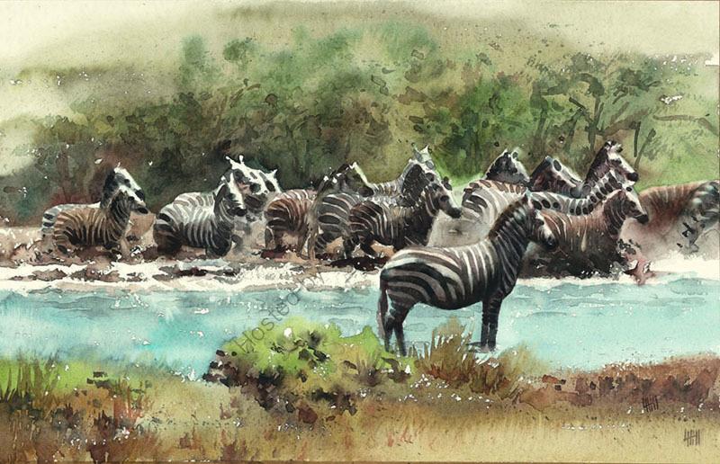 Zebra crossing river