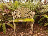 Old fern chair