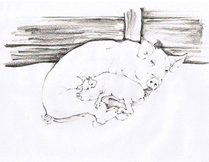 Pig and piglet image