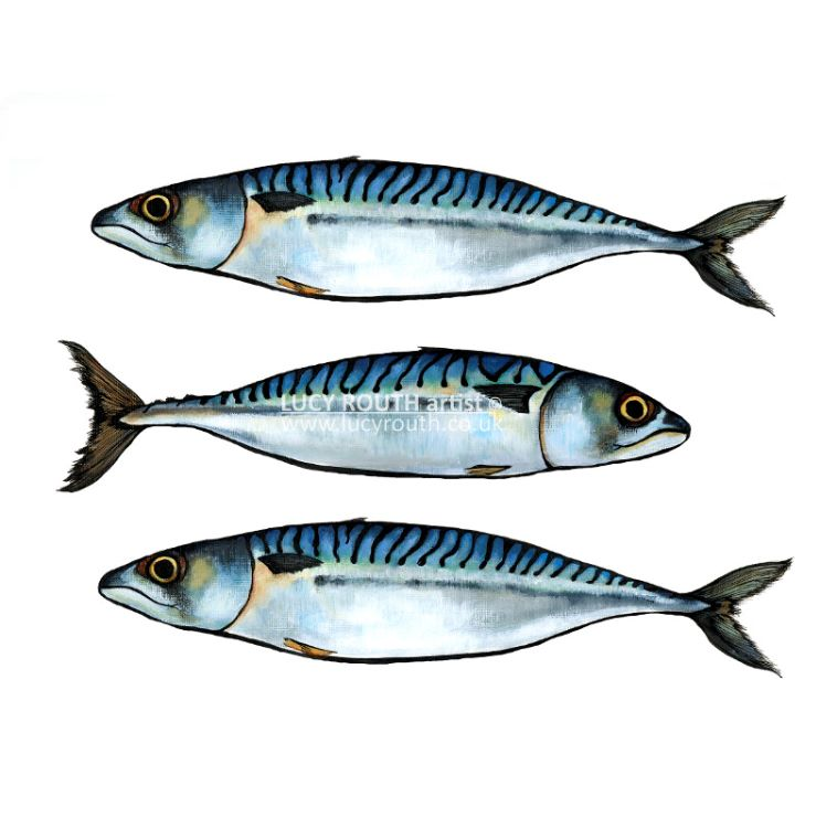 3 Mackerel mini print