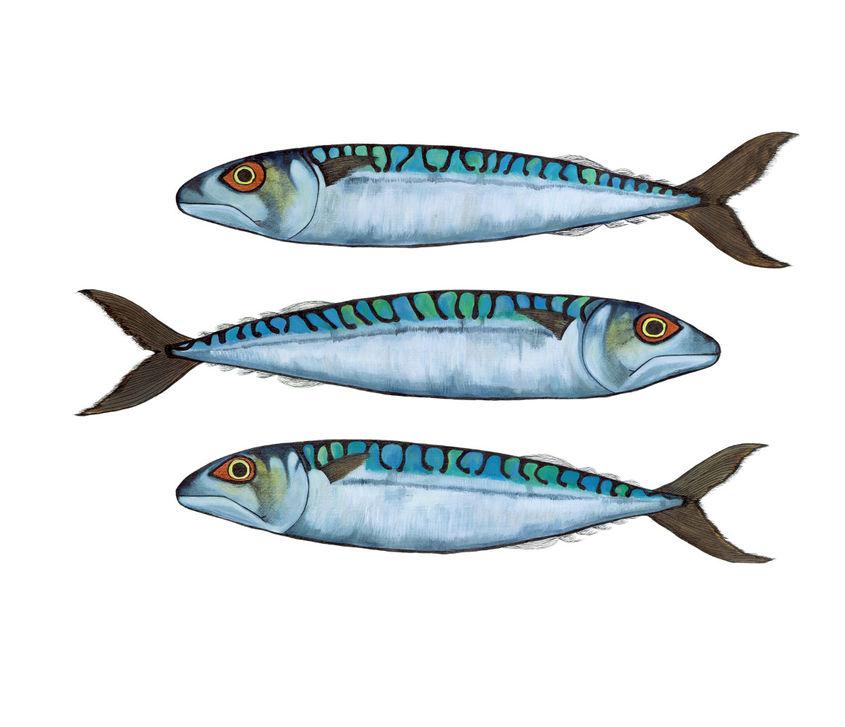 Three Mackerel