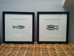 Sprat I and Sprats II