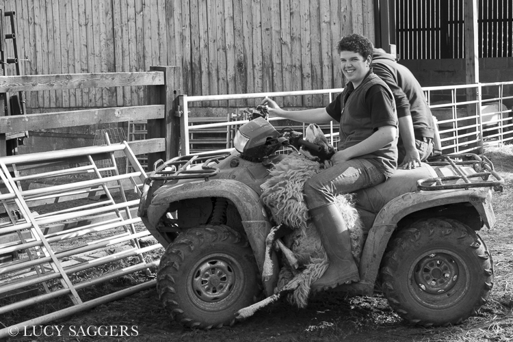 Bringing in the last sick ewe, Bransdale, March 2014