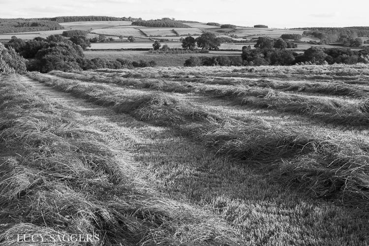Freshly cut hay, Ampleforth, July 2013