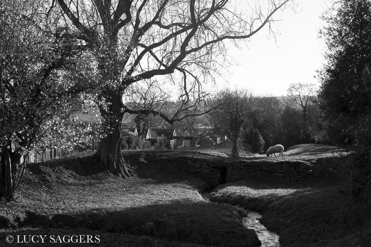 Old mill dam, Ampleforth, December 2013
