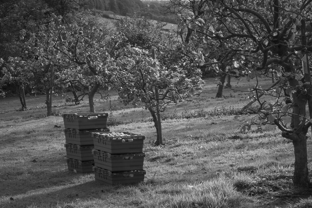 Ampleforth Abbey Orchard