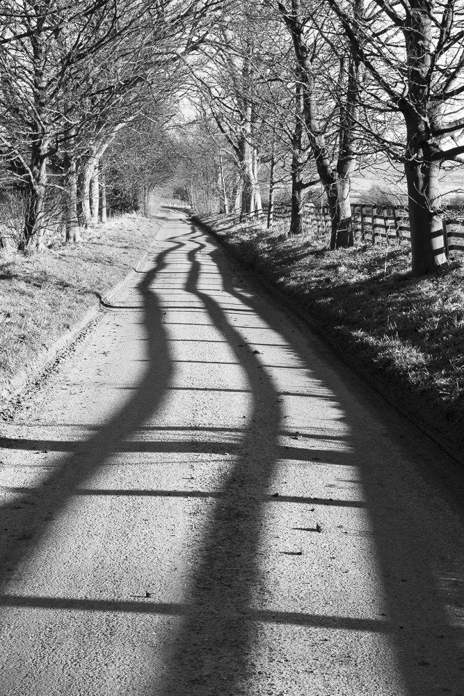 Fence shadow, Dalby, February 2015