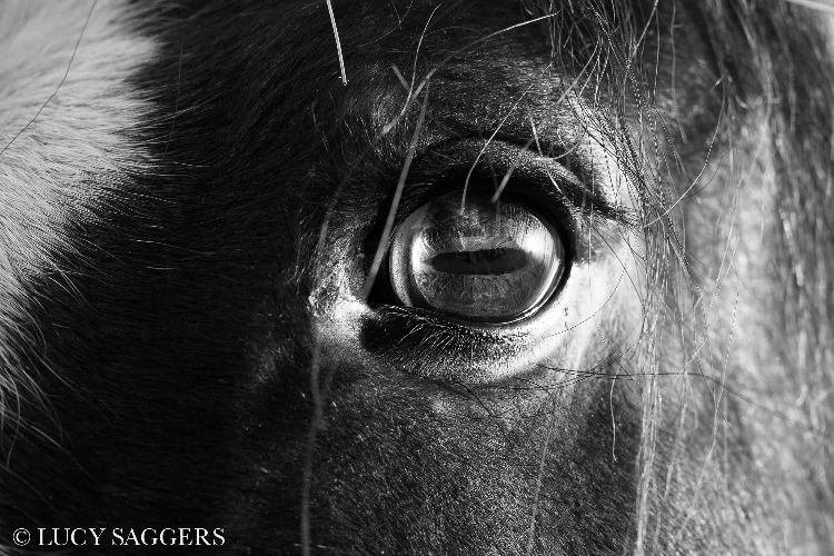 Horse's eye- Ampleforth- January 2016