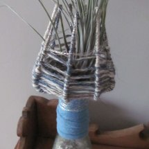 air plant bottle terrarium