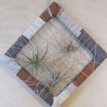 large air plant frame