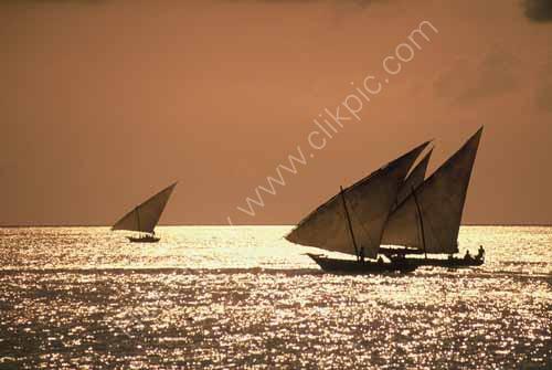 Dhows at sunset, Zanzibar