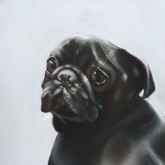 Black pug 8 x 8 in (Unframed) £60