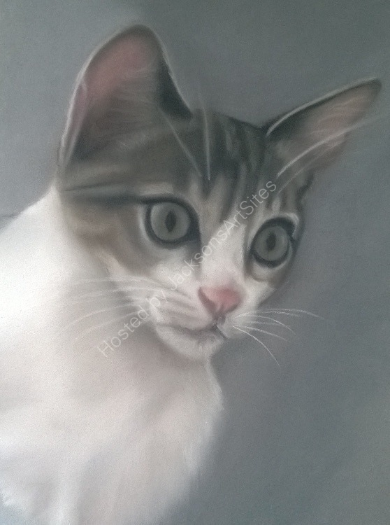 Tabby and White Kitten 8 x6 in