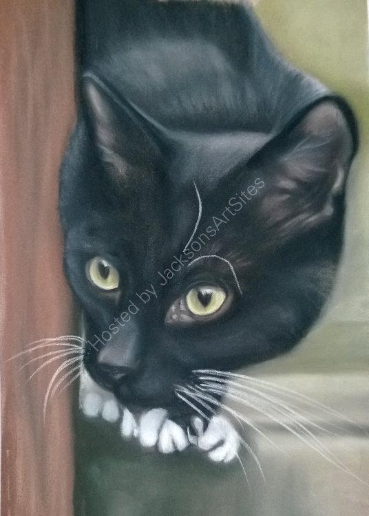Black Cat 9 x 6 in
