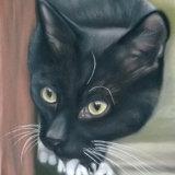 """Black Cat 9""""x6"""" Pastel"""