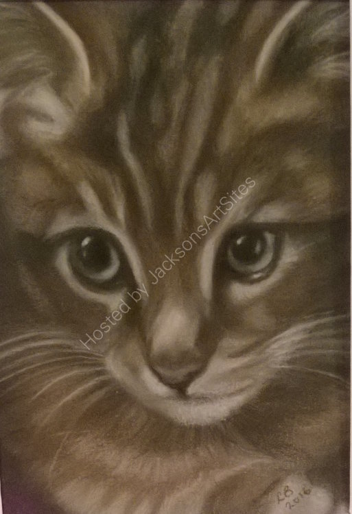 Tabby Kitten 8 x 6 in