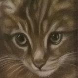 "Tabby Kitten 8"" x 6"" Pastel"