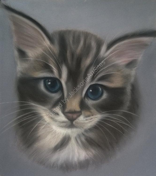 Kitten 9 x 7 in