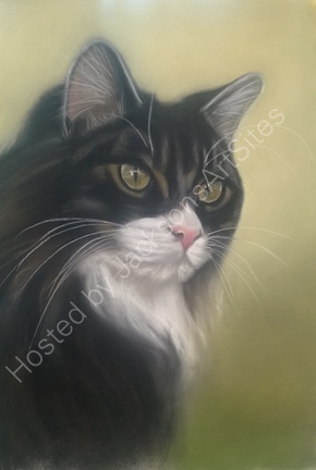 """Wookie"" 12 x 8 in. This was donated as a raffle prize for Cats Protection League and raised £80"