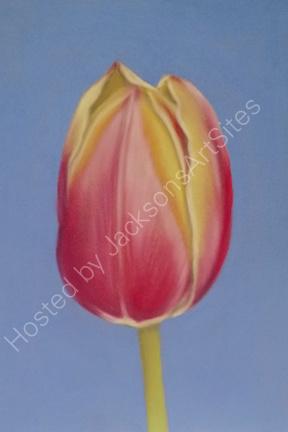 Tulip 6 x 4 in (in a 10 x 8 in mount) £40