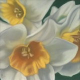 "Daffodils I 9"" x 9"" (in ornate gilt frame size 12"" x 12"") Pastel - £120"