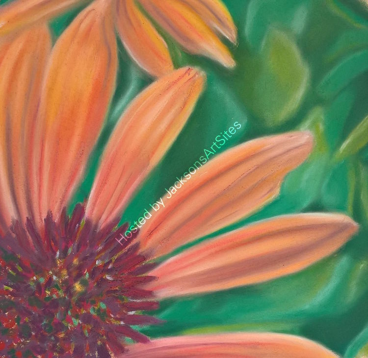 Cone Flower 8 x 8 in (in a 12 x 12 in mount) £50