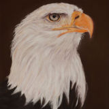 Eagle Eye (Pastel) SOLD