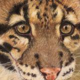 Clouded Leopard  (Pastel) SOLD