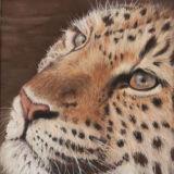 Leopards Gaze (Pastel) SOLD