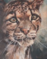 """Clouded Leopard (Oil on canvas, size 12"""" x 16"""" unframed)SOLD"""